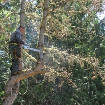 tree - removal