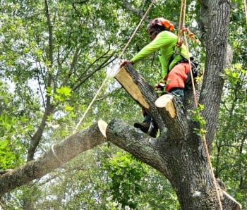 tree removal fight maryland