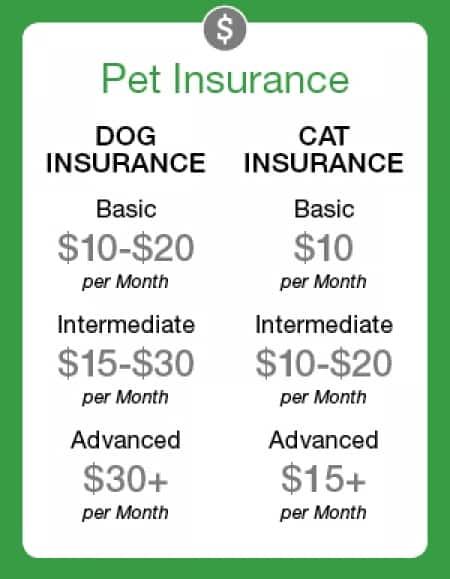 Cheaper Pet Insurance For Older Dogs