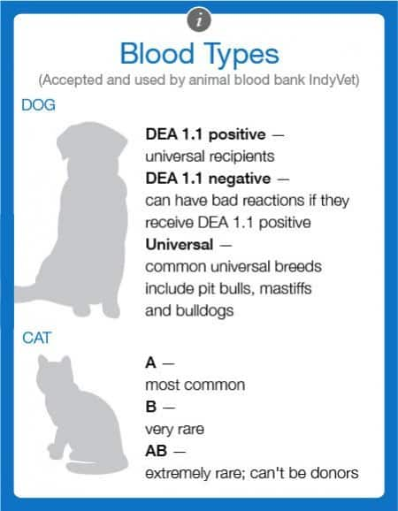 Clinics label blood differently, but IndyVet uses these blood types. (Graphic by Matt Mukerjee)