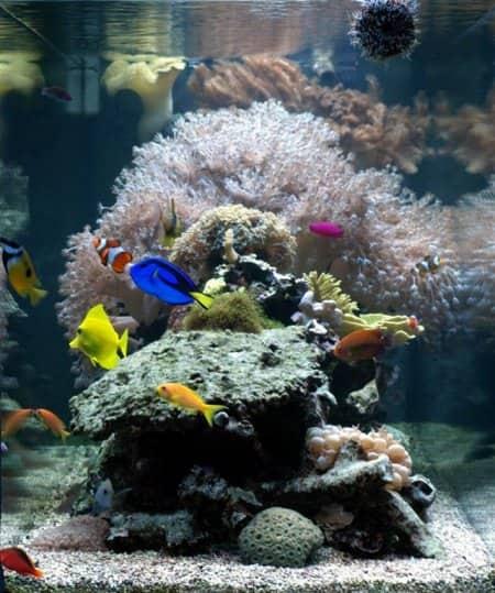 fish tank aquarium (Photo by Angie's List)