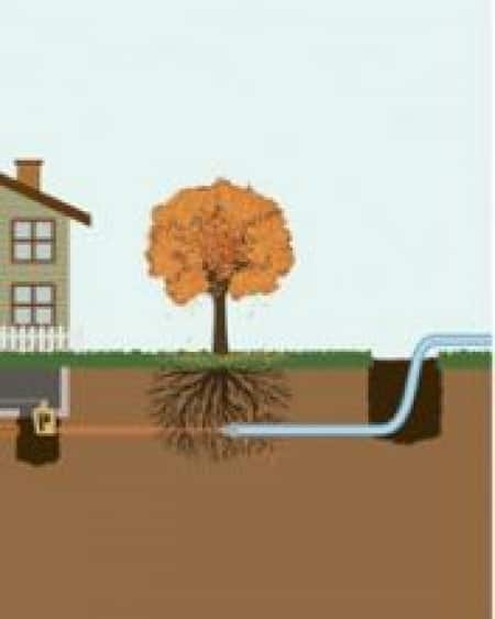 illustration of tree roots in sewer line