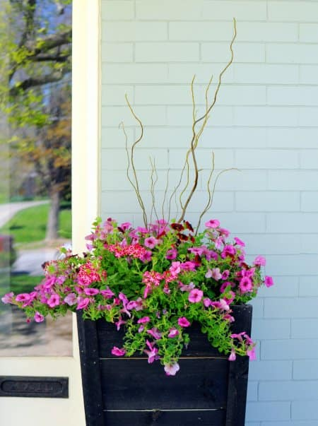 Curly willow branches, calibrachoa, verbena and petunias in planter