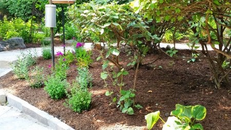 Perfect Plants to Place over Septic Systems | Angie's List