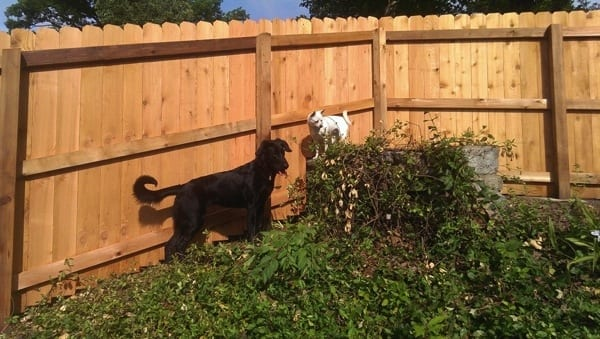 Angie's List member Jena Peterson of Cincinnati says she needed a new fence to keep her two dogs contained. (Photo courtesy of Peterson)