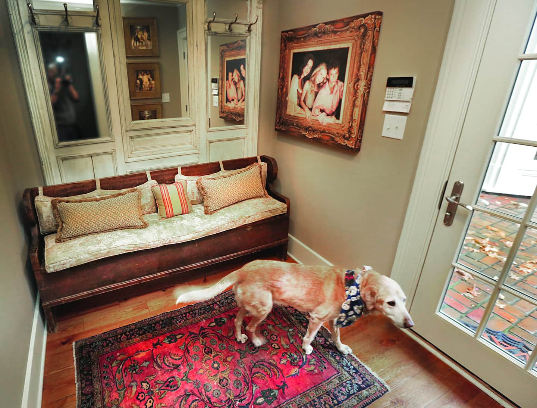 dog with bandana in mud room