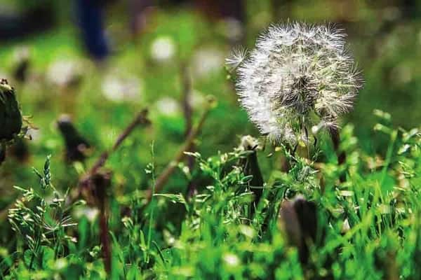 weeds (Photo by )