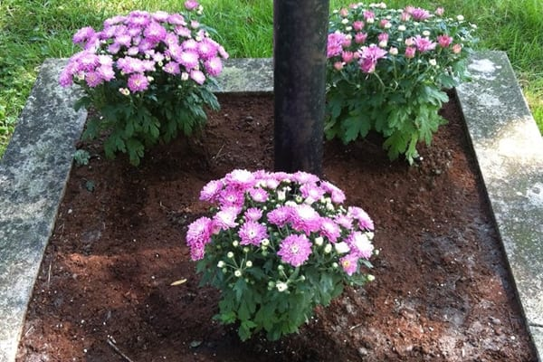 Adding mulch as a layer of insulation on top of the soil can prevent sudden changes in soil temperature that can hurt your plant's roots, says Stumer. (Photo courtesy of Angie's List member Christina W. of Detroit)