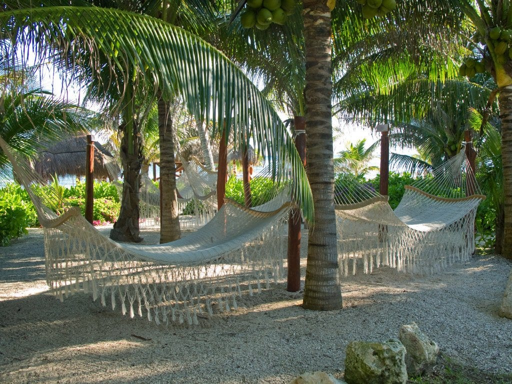 Hammocks under palm trees