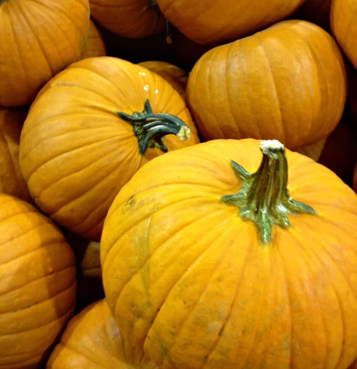 D.C. pumpkins (Photo by Jason Hargraves)