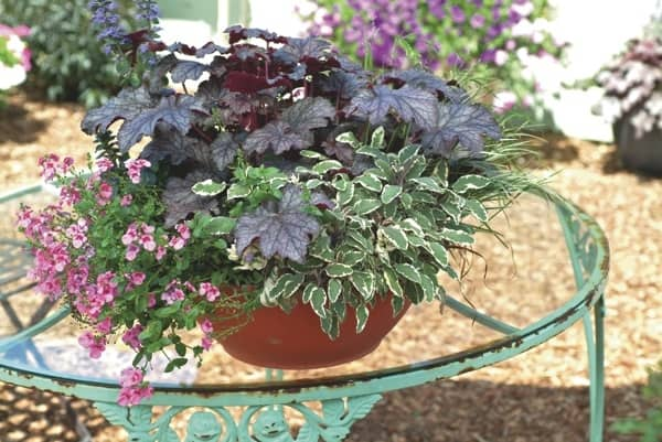 Master gardeners say combining mulitple plants in one container can add color and depth to tables. (Photo by Chris Brown Photography)