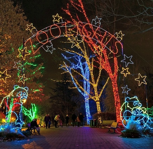 Evenings at the zoo are colorfully lit during the month of December. (Photo courtesy of Smithsonian's National Zoo)