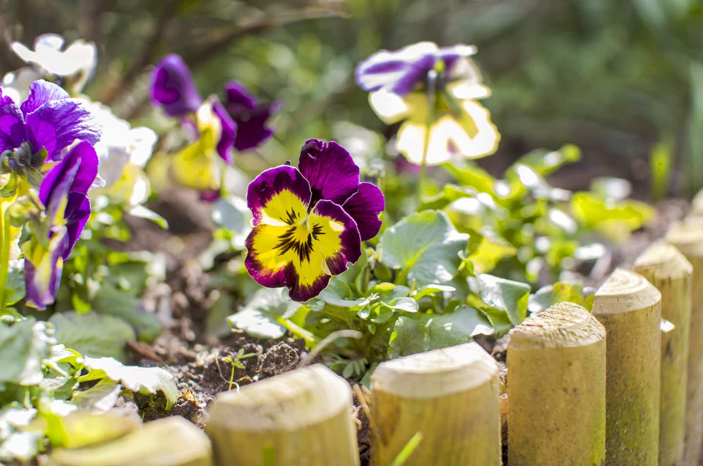 Edging Ideas for Flower Beds Gardens and Landscaping
