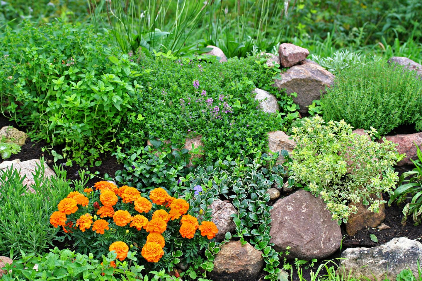 rock garden with herbs and shrubs - Rock Garden Ideas