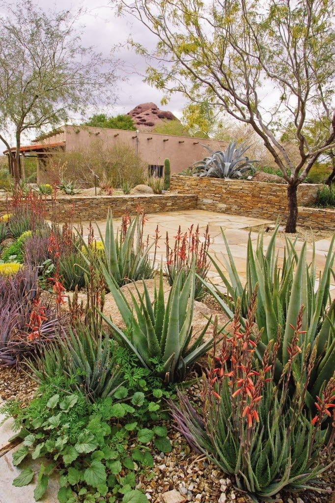 desert landscape, cactus, adobe