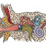 Ear tubes are inserted into the eardrum to create an airway that keeps fluid from building up. (Illustration by Brandon Smith)