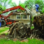 Tree falls on home