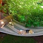 A dog on a hammock
