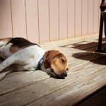 dog lying in the sun