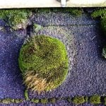 clumps of moss on a roof