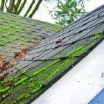 moss on asphalt shingle roof
