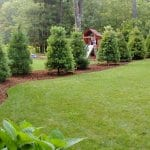 Trees lining a backyard