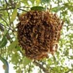 Wasp next