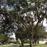Oftentimes, common tree care solutions can be performed for a fraction of the price of a full tree removal, says Camu. (Photo courtesy of Angie's List member Brianne W. of Orlando, Fla.)