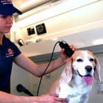 Dog grooming in Washington, D.C.