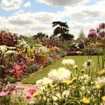 a large garden with a lot of flowers