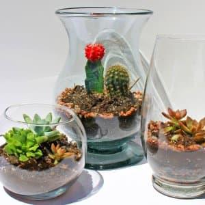 DIY terrariums in vase