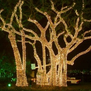 Palm Trees Decorated With Holiday Lights