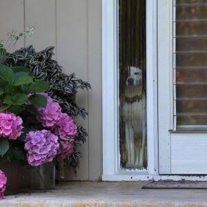 dog looking out door window