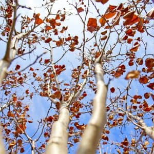tree branches with fall leaves
