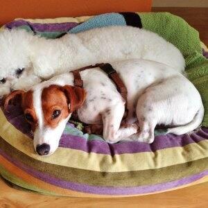 2 little dogs in a basket
