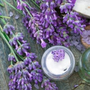 Get Rid Of Mice And Spiders With Essential Oils Angie S List