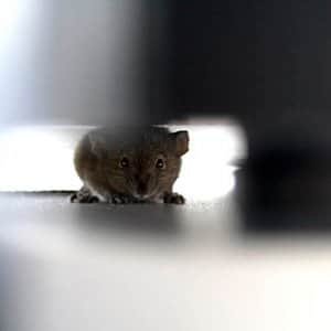Although you may be able to handle certain pest control on your own, some pests should be left to the professionals. (Photo courtesy of Rifca Peters)