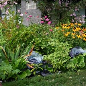 cabbage and kale in flowerbeds