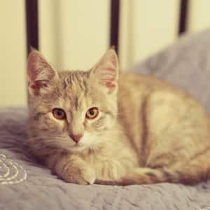 orange cat naps on blanket