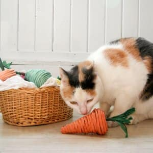 cat with DIY cat toys