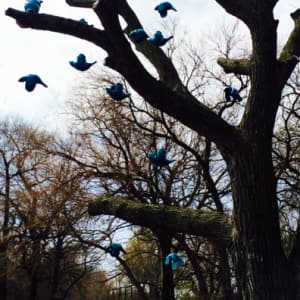 """Margot McMahon's """"Flock"""" is on display in Jackson Park. The tree used in this sculpture is a 125-year-old elm. (Photo courtesy of the city of Chicago)"""