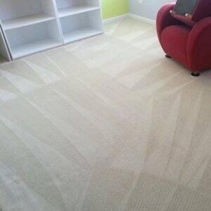 clean carpets to prevent carpet beetles