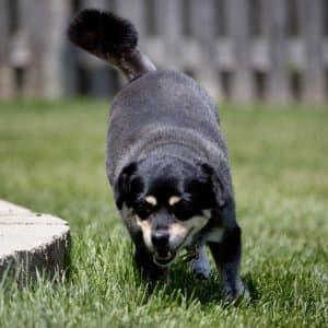 dog in yard