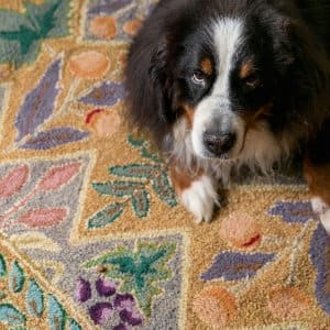 dog sitting on a rug (Photo by Brandon Smith)