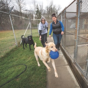 8 Questions To Ask Dog Kennels Before Boarding