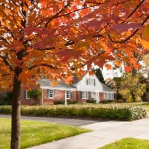 orange fall leaves