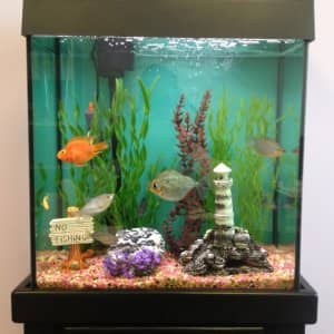fish tank aquarium (Photo by Angie's List)