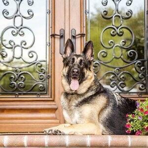 german shepherd sitting on doorstep