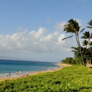 A beach and palm trees in Hawaii