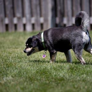 dog in backyard (Photo by Eldon Lindsay)
